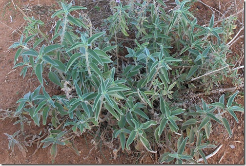 HPIM5013 crop