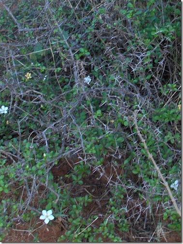 HPIM5015 crop