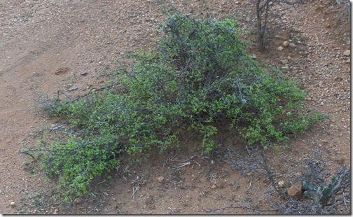 HPIM5022 crop