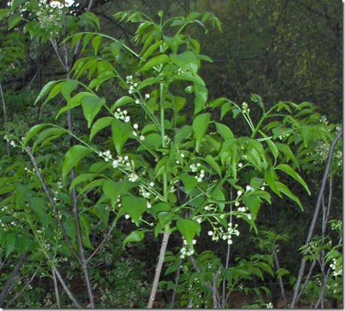 HPIM5085 crop