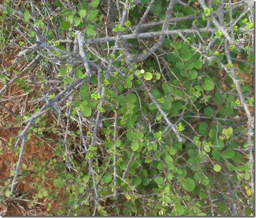 HPIM5093 crop