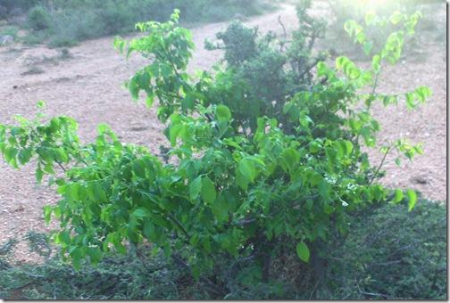 HPIM5097 crop