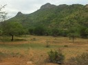 Arunachala - The Elephant