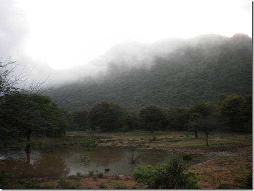 20091111_1195