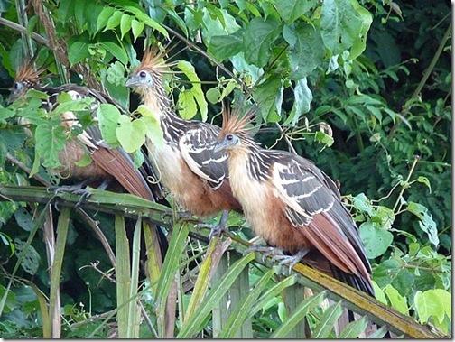 stinky birds