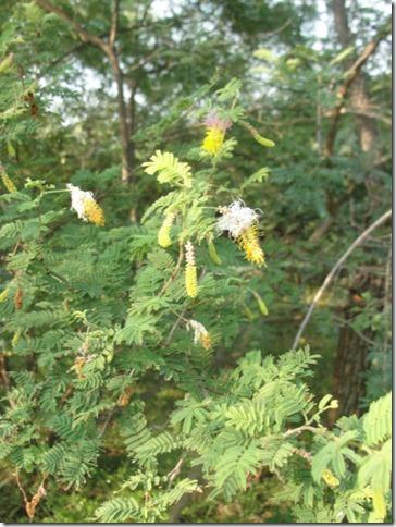 Arunachala flowers 128