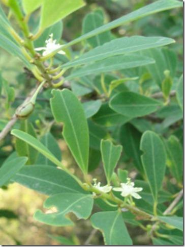 Arunachala flowers 131