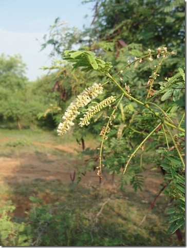 Arunachala flowers 143
