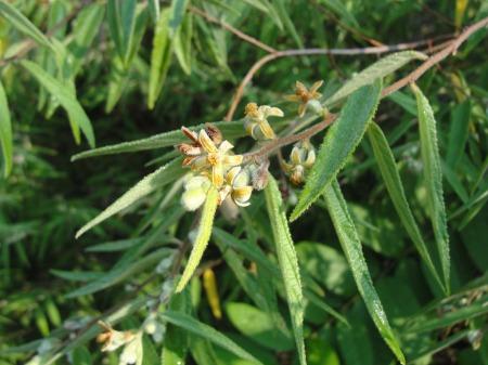 Arunachala-flowers-156.jpg