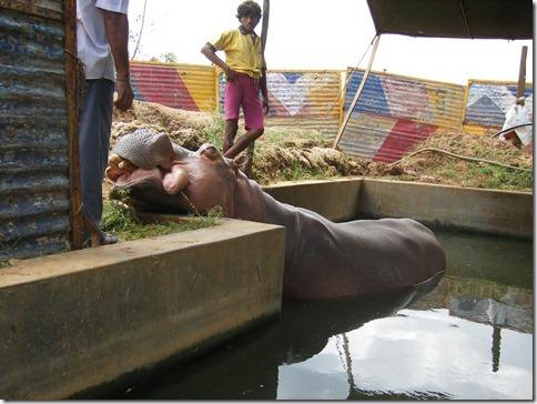 Hippo rescue 2