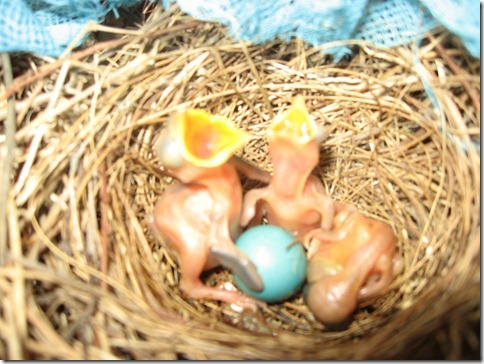 Newborn birds