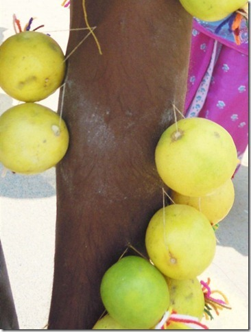 493 lemons-sewn-on_thumb