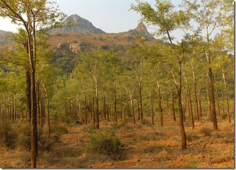 Arunachala from Trees area of Inner Path