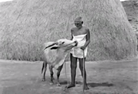 Ramana Maharshi and Lakshmi the cow